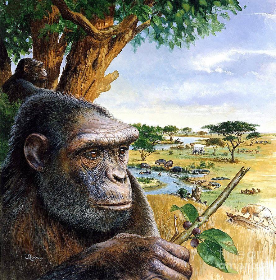 Первые человеческие существа, как они выглядели